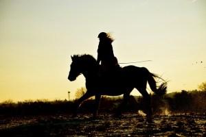 Sunset gallop
