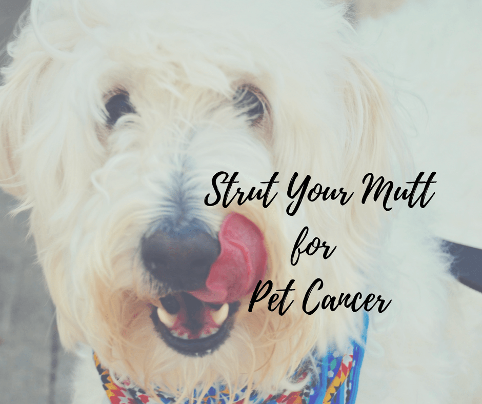 Strut Your Mutt 2017