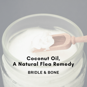 Coconut Oil, A Natural Flea Remedy