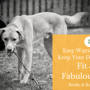 3 Easy Ways to Keep Your Dog Fit & Fabulous