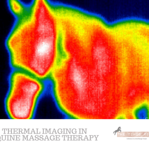 Thermal Imaging Equine Massage Therapy