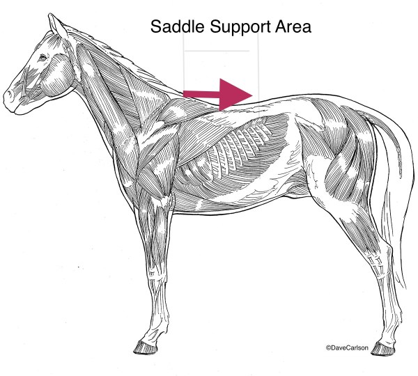 Saddle Support Area