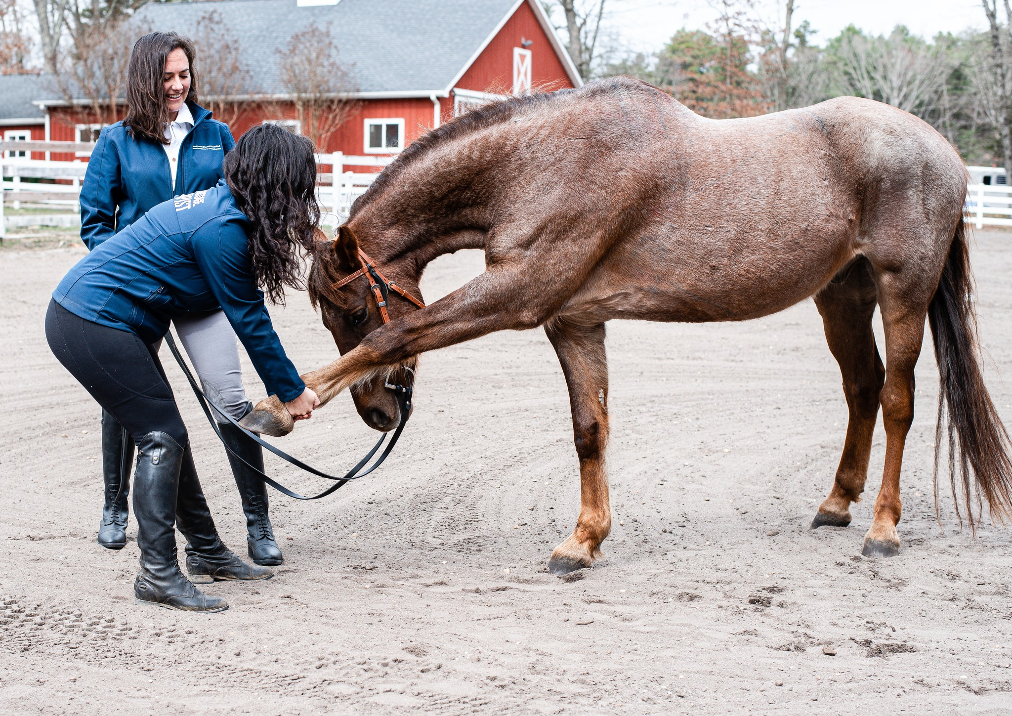 Equine Rehabilitation Diary: The Beginning