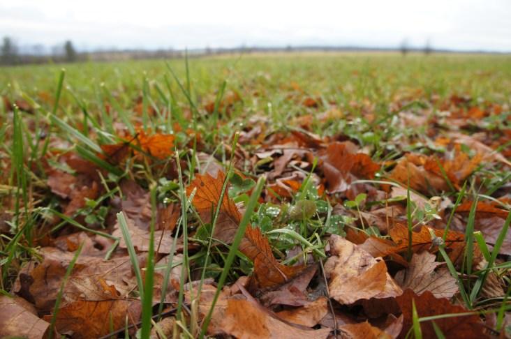 December Green 4