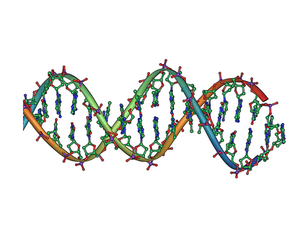 DNA double helix horizontal