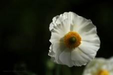 close flower 5