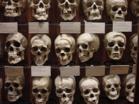 Walsh has studied and cataloged over 100 midwestern skulls. Photo: http://goo.gl/1Mo7JI