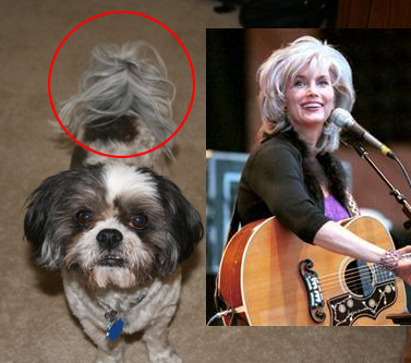My mother's dog Gonzo...Emmylou Harris.