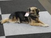 Einsatzhund Trauerbegleitung