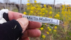 Martin Mallett in a vineyard