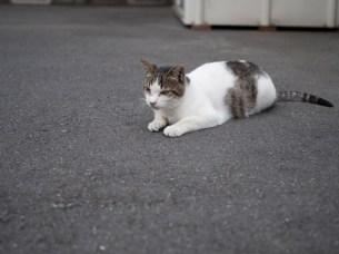 Carpark kitty