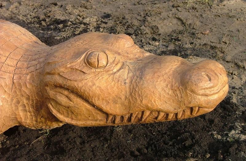 crocodile-2