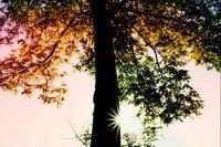 Shady_tree