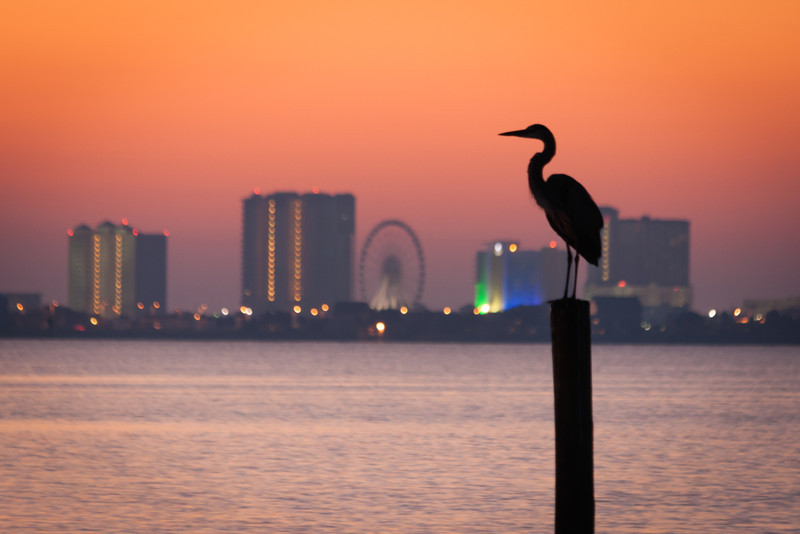 My focus was on the sunrise as I was shooting around a small pier, when this large crane came along and made himself comfortable. I had to move down the shore a bit to get a nice profile and had time for just one shot before he moved, then flew away. Photo by Tim Stanley Photography.