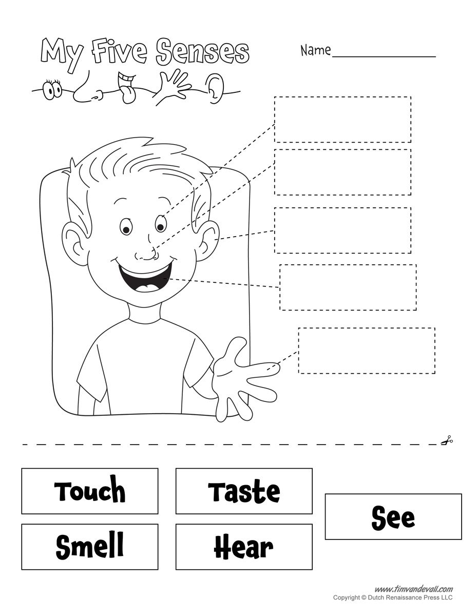 Five Senses Worksheet  Tim's Printables