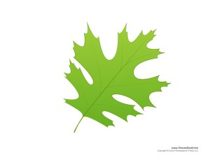 Leaf Picture