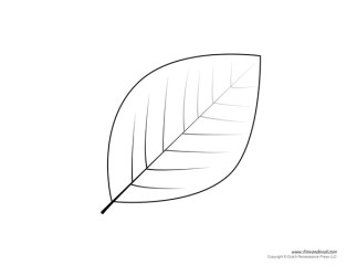 leaf template printable templates coloring pages printables lines leave timvandevall