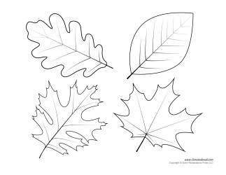 templates leaf printables coloring pages shape these section library