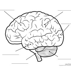 Brain Diagram Without Labels The Basic Ear Label Gallery For Gt