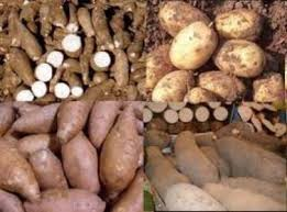 FARMERS URGED TO GROW MORE TUBER CROPS