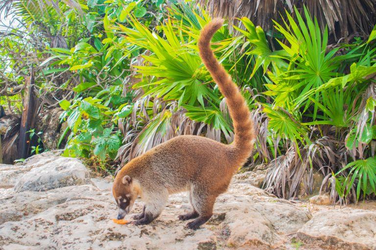 wat je niet moet doen in Tulum dieren overal dieren