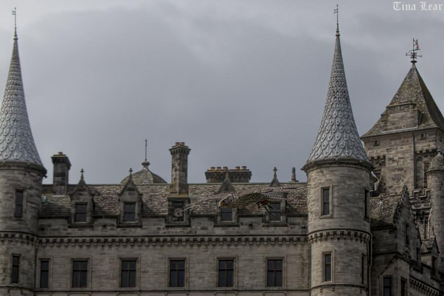 Dunrobin Castle (5/6)