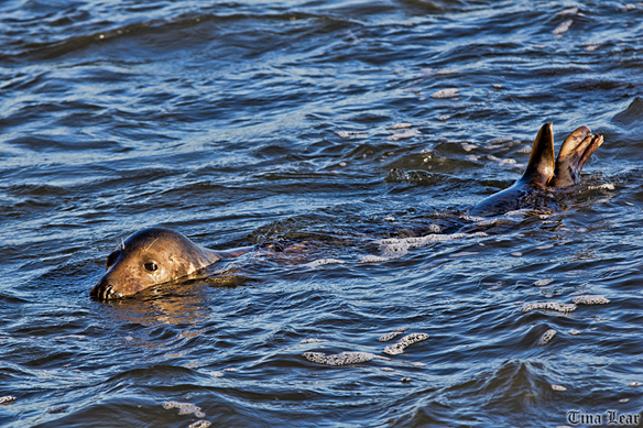 VISIT TO SEE THE SEALS (4/6)