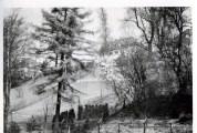 Blick vom Elbwanderweg zur Elbchaussee 60er Jahre (Pap205)