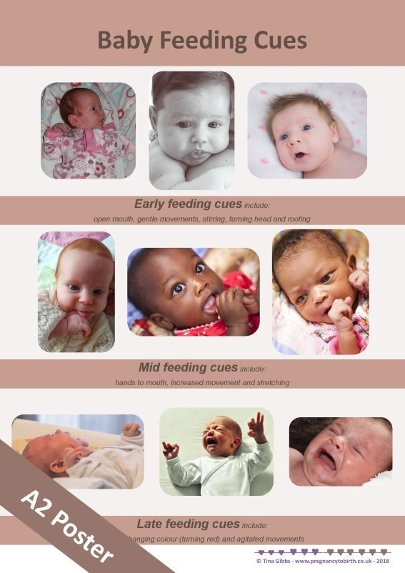 baby feeding cues poster