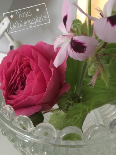 Erdbeer_Duftgeranie_Rose