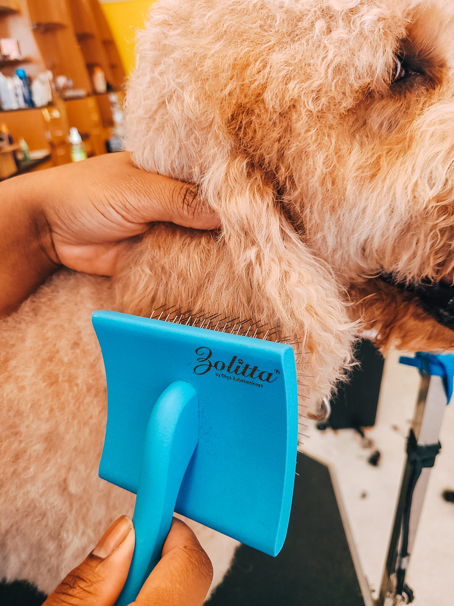 Brushing and Combing a Dog