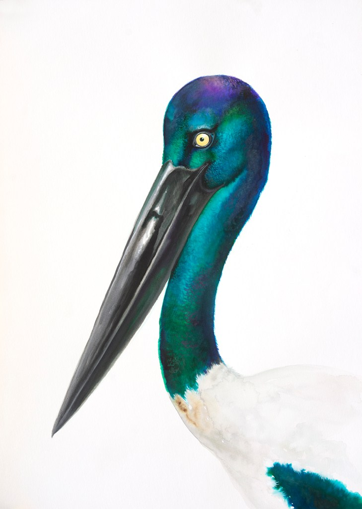 Watercolour painting of a black necked stork by Tina Wilson