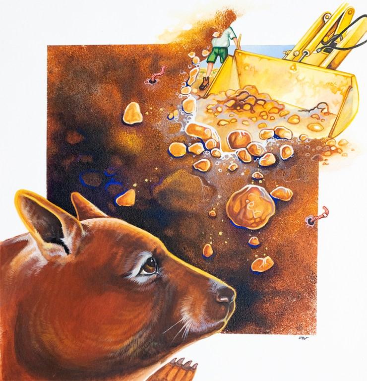 Wombat Illustration by artist Tina Wilson