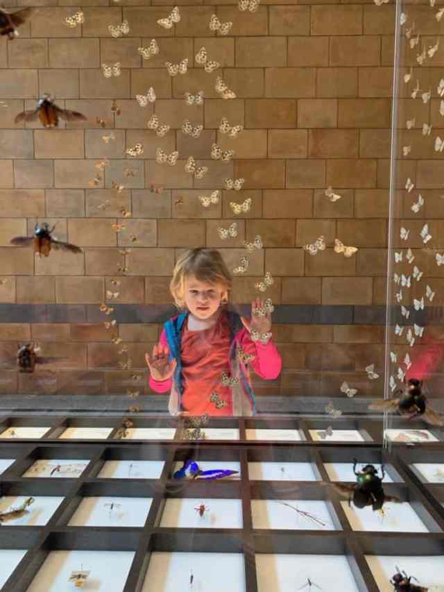 Tin Box Baby stood at glass case of insects in the Natural History Museum in London