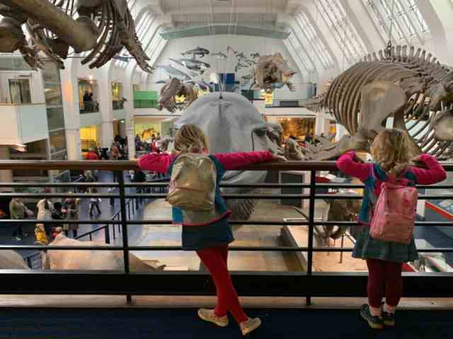 Tin Box girls stood on the balcony in the Mammels zone of the Natural History Museum in London