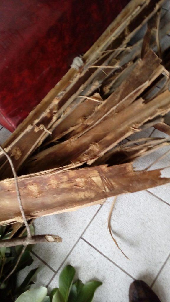 Grosses écorces d'eucalyptus