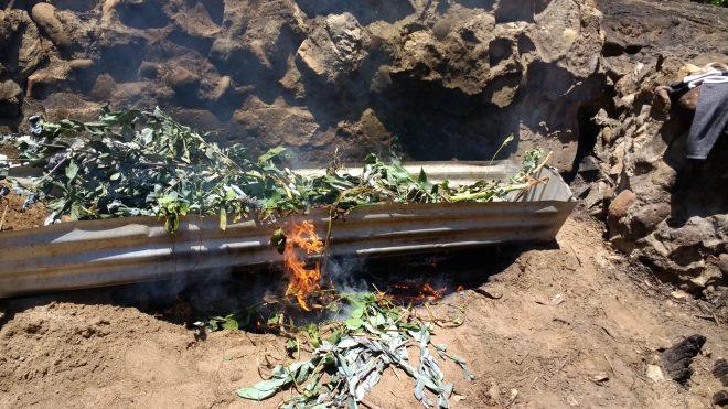 La super casserole à l'essai avec eucalyptus et ronces
