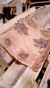 Impression révélée et fixée dans un bain de soupe de clous (acétate de fer)