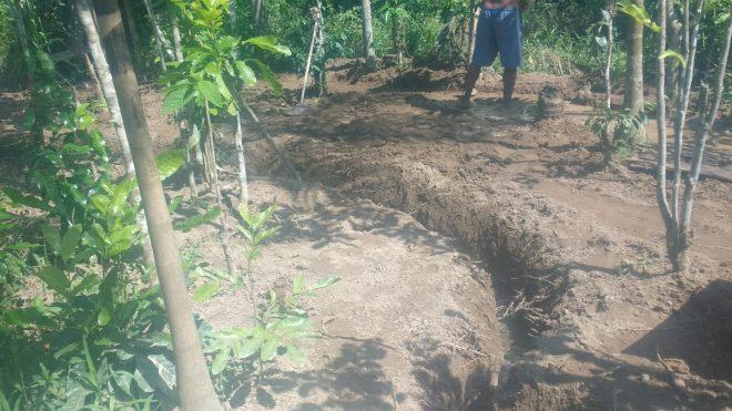 Spirale d'irrigation en pleine évolution, elle contourne les arbres existants... Brésil