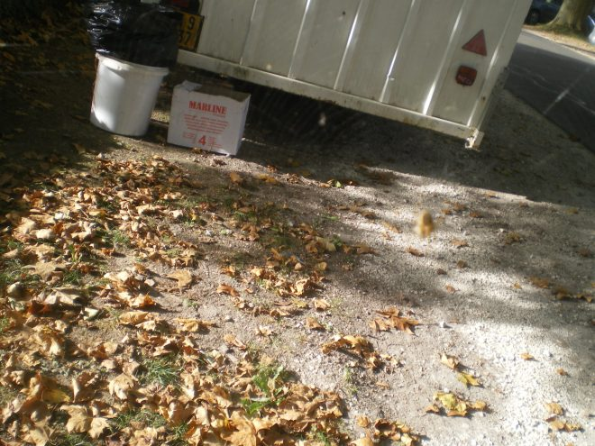 Teinture aux feuilles mortes, usage malin d'un déchet courant