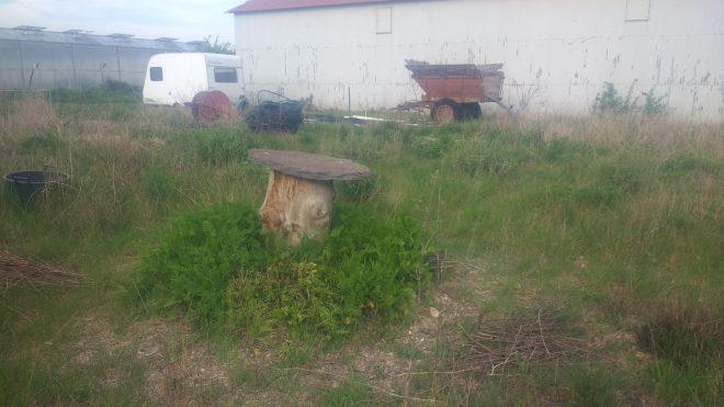 La ruche centrale, entourée de tanaisie, plante tinctoriale