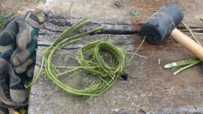Orties, premier essai de préparation de fibres fraîches
