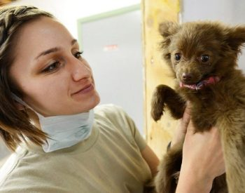 Reasons to Get Your Dogs Regularly Checked with a Vet