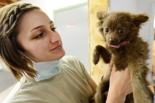Reasons to Get Your Dogs Regularly Checked with a Vet 8 Reasons to Get Your Dogs Regularly Checked with a Vet