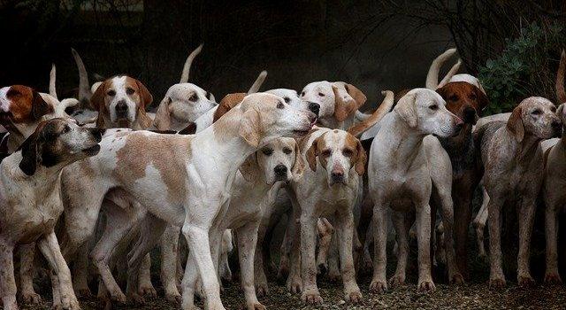 Multiple Dog Breeds