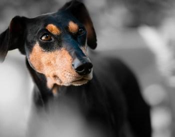 Coronavirus – Did It Cause Any Changes in Pet Adoption Statistics?