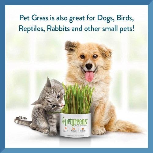 Pet Greens Live Cat Grass