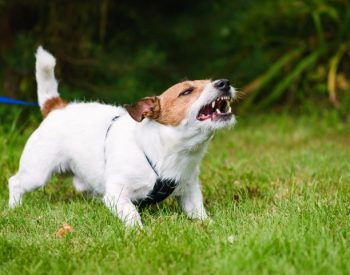 5 Reasons Why Dogs May Bite