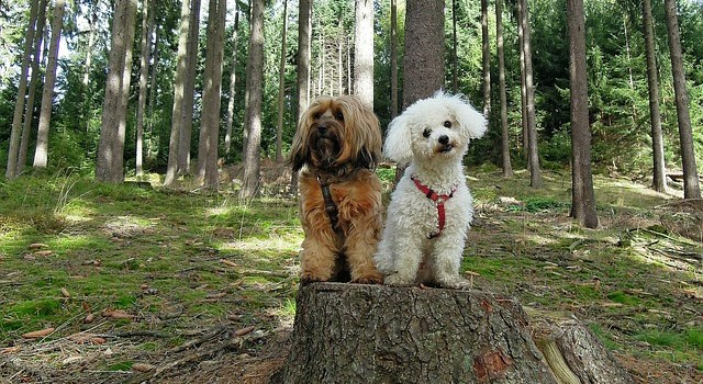 Low Allergy Dog Breed