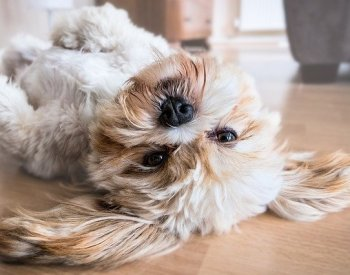 How Can You Help Your Dog To Lead A Healthy Dog Life